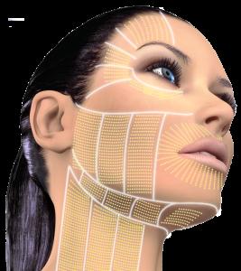 YDRAY-ulthera-cg-face-face-sides